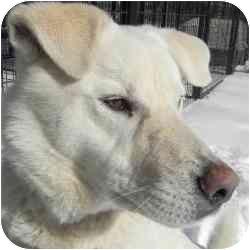 Shepherd (Unknown Type) Mix Dog for adoption in Kansas City, Missouri - Courtesy List-Bubbles