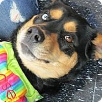 Adopt A Pet :: Rio - Midway, KY