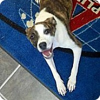 Adopt A Pet :: APRIL - Shirley, NY