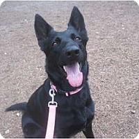 Adopt A Pet :: Sadie - Green Cove Springs, FL