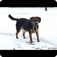 Adopt A Pet :: LuLu - Richmond, VA