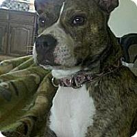 Adopt A Pet :: Avery - Rochester, NY