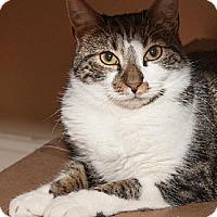 Adopt A Pet :: Luca - Ashland, MA