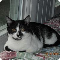 Adopt A Pet :: Trixie - Riverside, RI