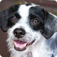 Adopt A Pet :: Frannie - Los Angeles, CA