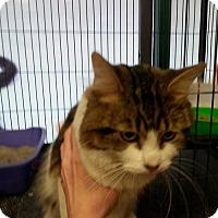Adopt A Pet :: Topsy - Hamilton, ON