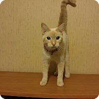 Adopt A Pet :: Mischa - McDonough, GA