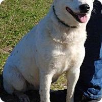 Adopt A Pet :: Jessica - Gainesville, FL