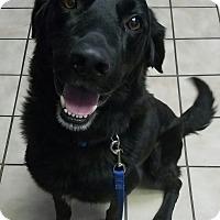 Adopt A Pet :: Tripp - Manchester, NH
