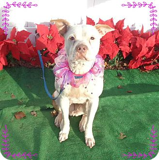 Pit Bull Terrier Mix Dog for adoption in Marietta, Georgia - SADIE
