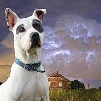 Adopt A Pet :: PEP-AY - Fairfield, CA