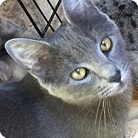 Adopt A Pet :: Queensford - Encinitas, CA