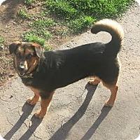 Adopt A Pet :: Shorty - Toronto, ON