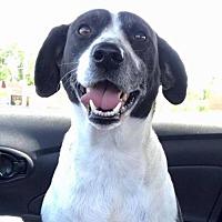 Adopt A Pet :: Susie - Tuscaloosa, AL