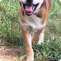 Adopt A Pet :: Harpo meet me 8/4 - East Hartford, CT