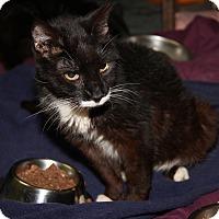 Adopt A Pet :: Socks (Update) - Marietta, OH