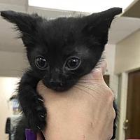 Adopt A Pet :: Jackson - Beckley, WV
