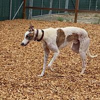 Adopt A Pet :: MONTY - Santa Rosa, CA