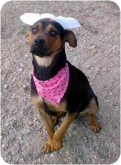 Shepherd (Unknown Type) Mix Dog for adoption in Huntington, New York - Haley