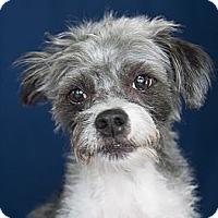 Adopt A Pet :: Titan - Rancho Mirage, CA