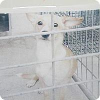 Adopt A Pet :: Ditto - Windsor, MO