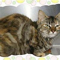 Adopt A Pet :: Emmie - Mobile, AL