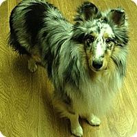 Adopt A Pet :: Jake - apache junction, AZ