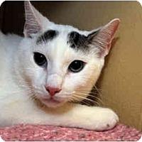 Adopt A Pet :: Google - Farmingdale, NY