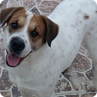 Adopt A Pet :: Maggie in McAllen - Austin, TX