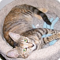 Adopt A Pet :: Julie - Scottsdale, AZ