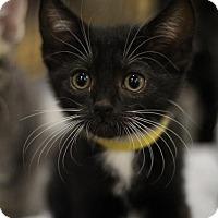 Adopt A Pet :: Trisha - Sacramento, CA