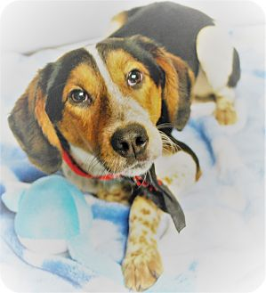 Hound (Unknown Type) Mix Dog for adoption in Waupaca, Wisconsin - Elroy