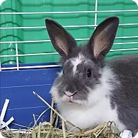 Adopt A Pet :: Flower - Pottsville, PA