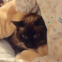 Adopt A Pet :: Ozzie - Asheville, NC