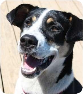 Border Collie/Husky Mix Dog for adoption in Berea, Ohio - Echo