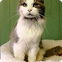 Adopt A Pet :: Maxine - Medway, MA