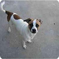 Adopt A Pet :: Murphy - Fort Lauderdale, FL