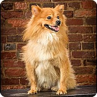 Adopt A Pet :: Evan - Owensboro, KY
