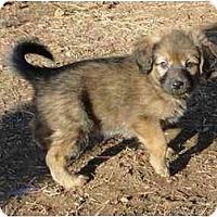 Adopt A Pet :: Priscilla - Arlington, TX