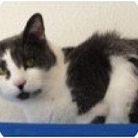 Adopt A Pet :: Rita - El Cajon, CA