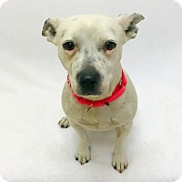 Adopt A Pet :: Roxy - Mission Viejo, CA