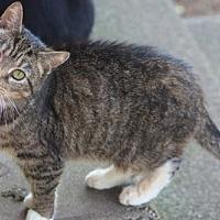 Adopt A Pet :: Sara SENIOR FEMALE - Morehead, KY