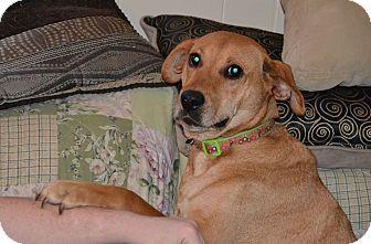 Golden Retriever/Labrador Retriever Mix Dog for adoption in Alabaster, Alabama - Josie
