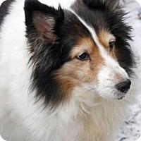 Adopt A Pet :: DAPHNE - Pittsburgh, PA