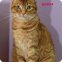 Adopt A Pet :: Jessica - Baton Rouge, LA