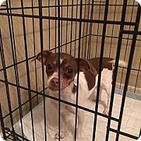 Adopt A Pet :: Leilani - Mesa, AZ