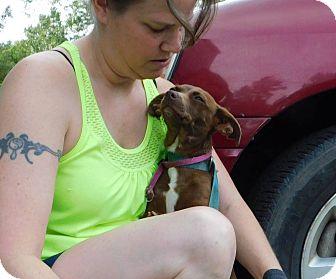 Chihuahua Mix Dog for adoption in Oakdale, Louisiana - Cinnamon