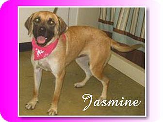 Labrador Retriever/Mastiff Mix Dog for adoption in Delaware, Ohio - Jasmine