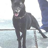 Adopt A Pet :: Nikki - Peru, IN