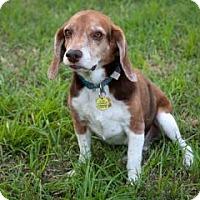 Adopt A Pet :: Ken - Phoenix, AZ